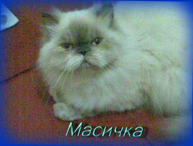 Кошка-персик ,Масичка