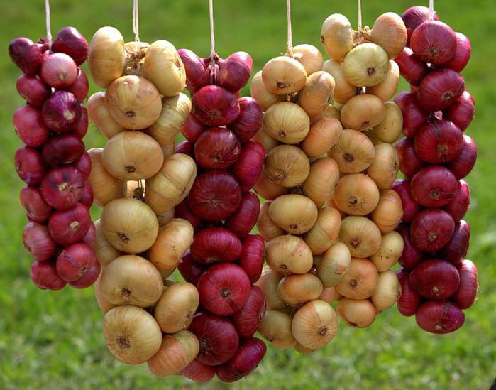 Как правильно хранить чеснок и лук