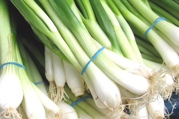 Как правильно выращивать лук порей