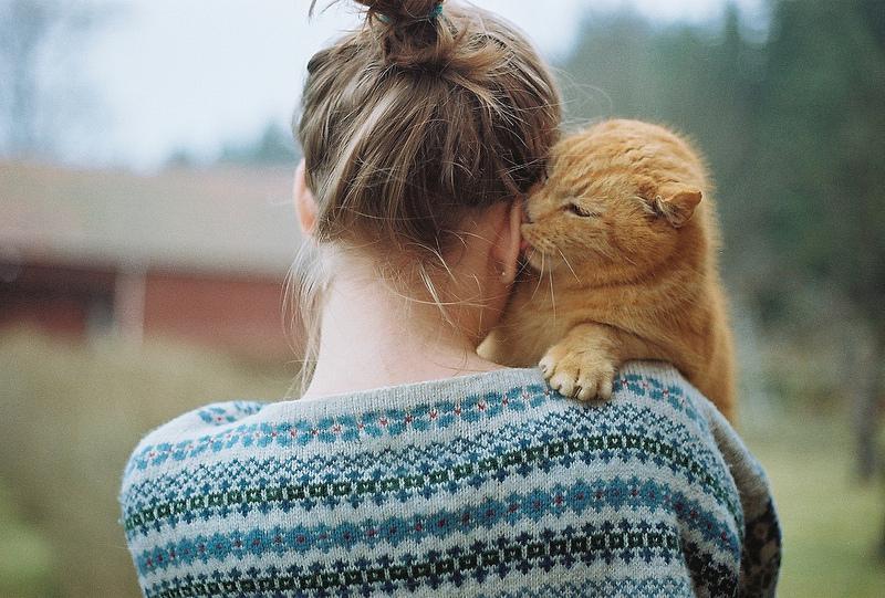 мир кошек, как понять их язык