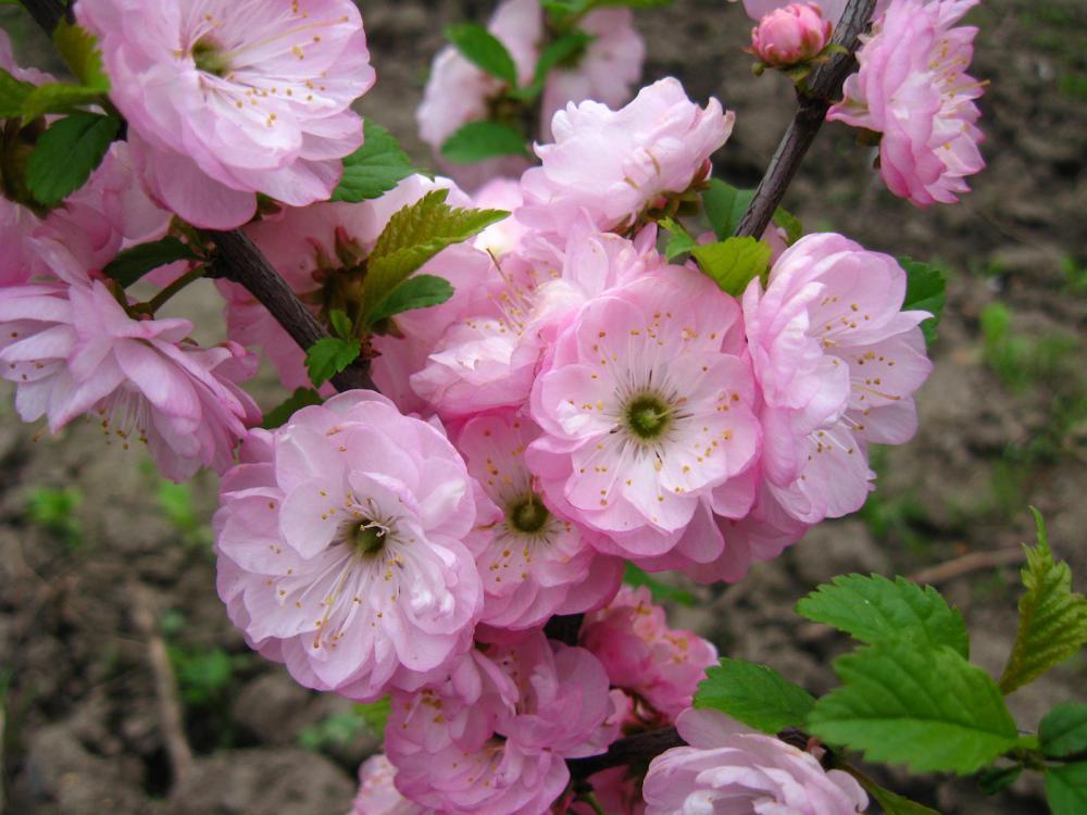Букет из веток цветущих деревьев (способы разбудить ветки) » Женский Мир