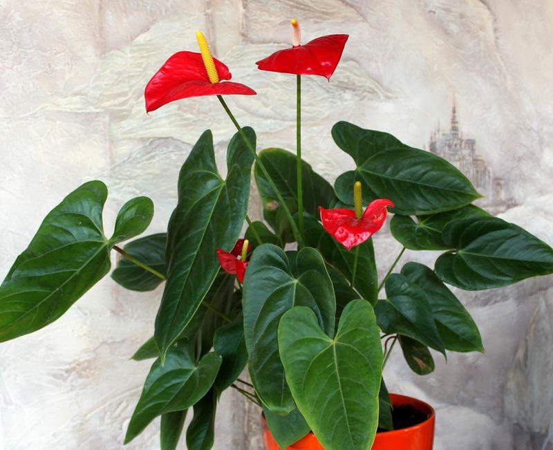 Про народные приметы и суеверия о комнатных растениях