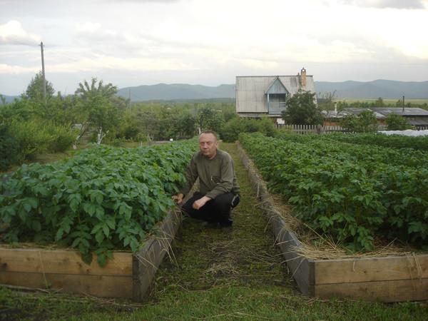 Удивительные урожайные грядки Игоря Лядова DSC00001 (600x450, 82Kb)