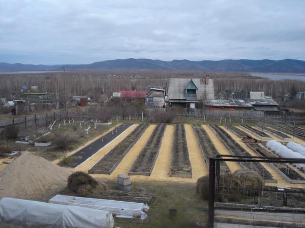 Удивительные урожайные грядки Игоря Лядова 1 005 (600x450, 74Kb)