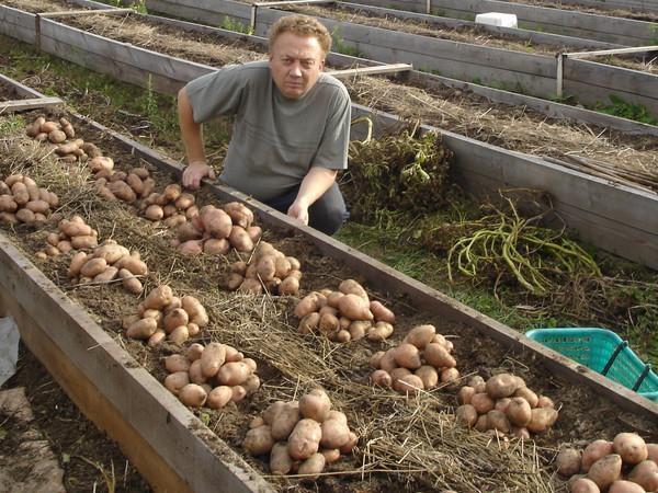 Удивительные урожайные грядки Игоря Лядова DSC00087 (600x450, 125Kb)