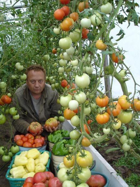 Удивительные урожайные грядки Игоря Лядова DSC00024А (450x600, 118Kb)