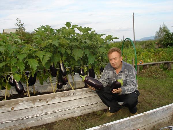 Удивительные урожайные грядки Игоря Лядова DSC00012 (600x450, 99Kb)