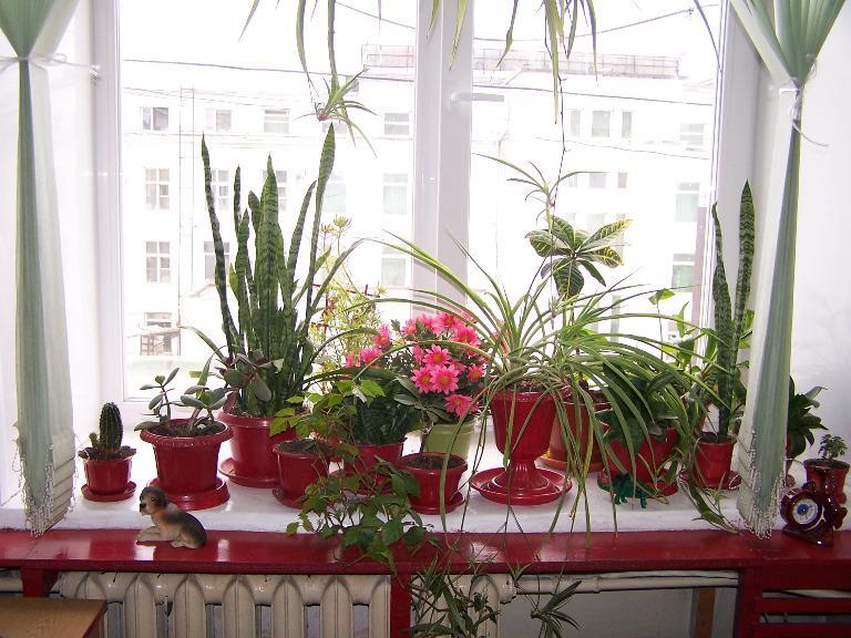 Комнатные цветы и растения - каталог с фотографиями и названием и уход за ними