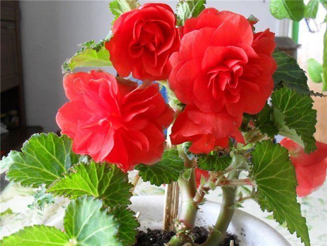 Комнатный цветок который поглощает негативную энергию