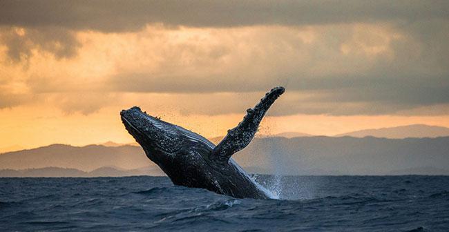 Блог Павла Аксенова. Морские гиганты. Фото GUDKOVANDREY - Depositphotos