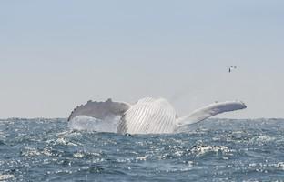 Блог Павла Аксенова. Морские гиганты. Фото naticastillog - Depositphotos