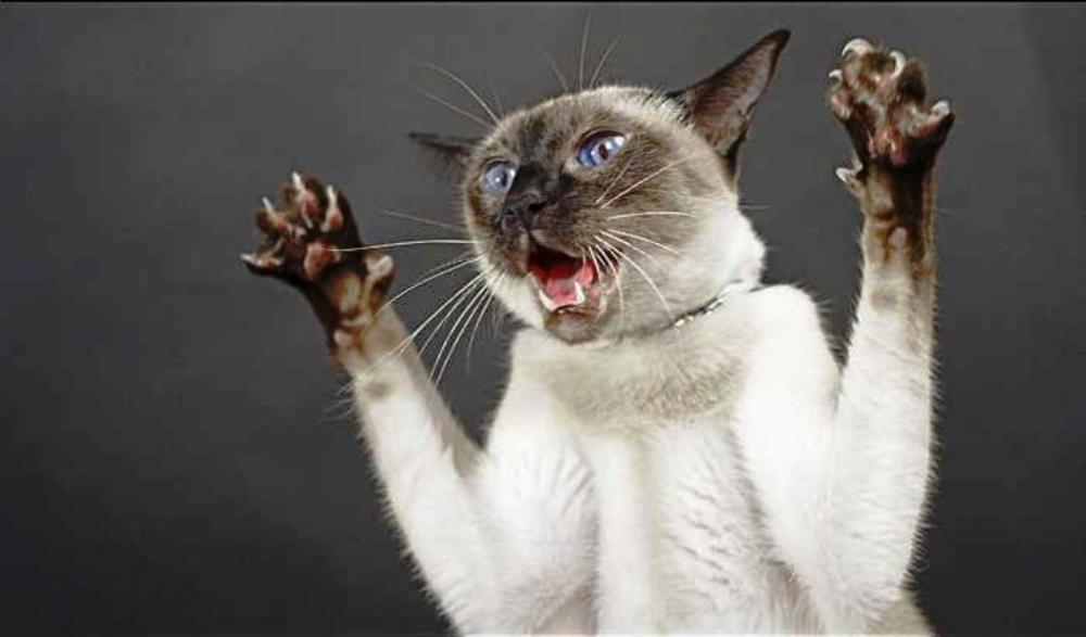 Почему кошка стала агрессивной? » Женский Мир