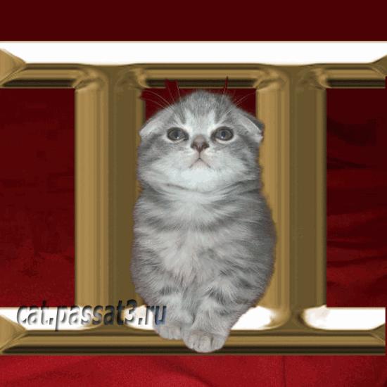 коты под знаком весы