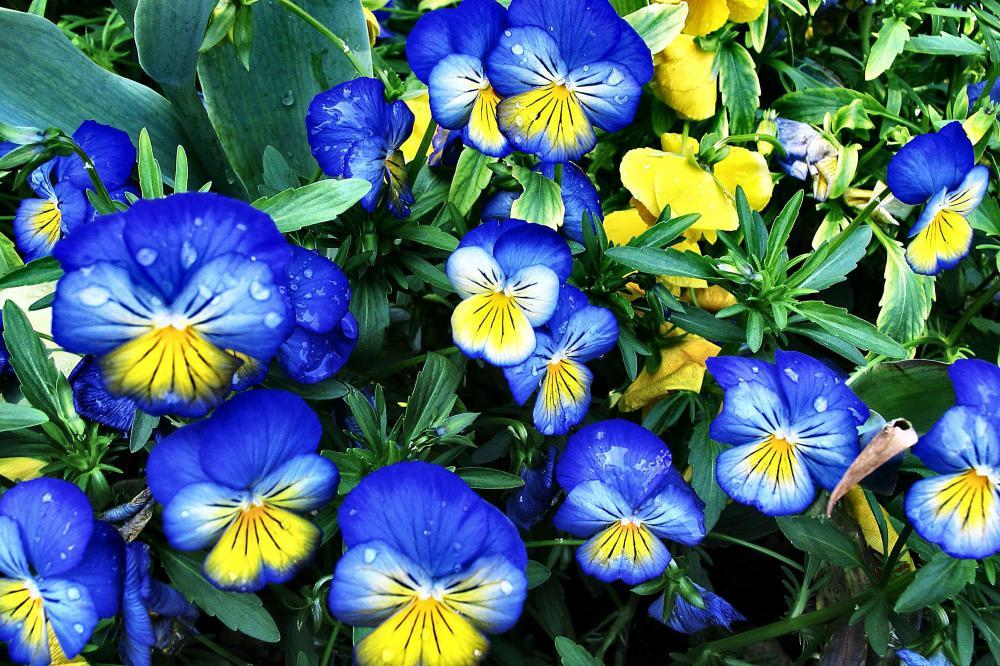 Какие цветы и семена цветов сажать осенью 160