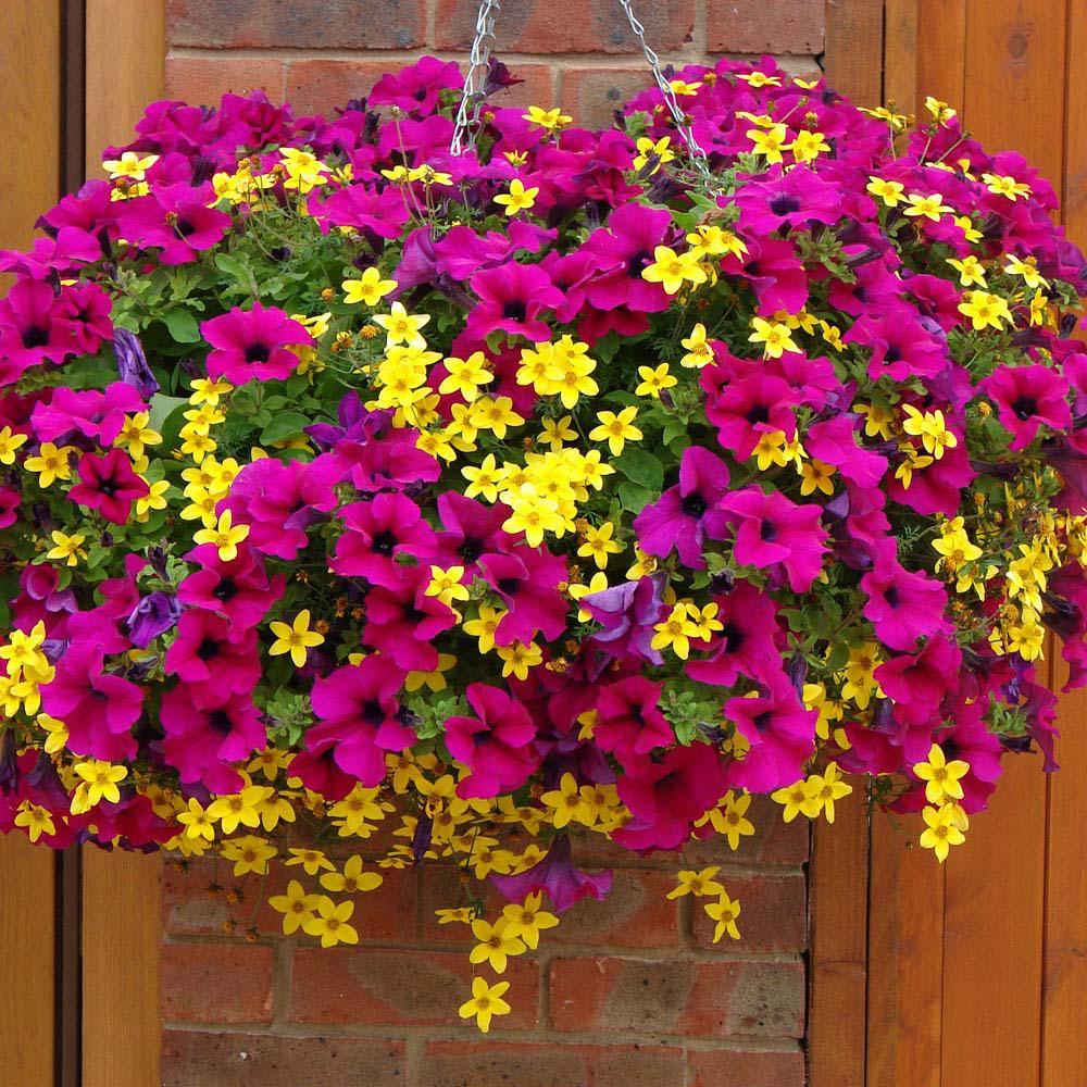 Какие цветы когда надо сажать