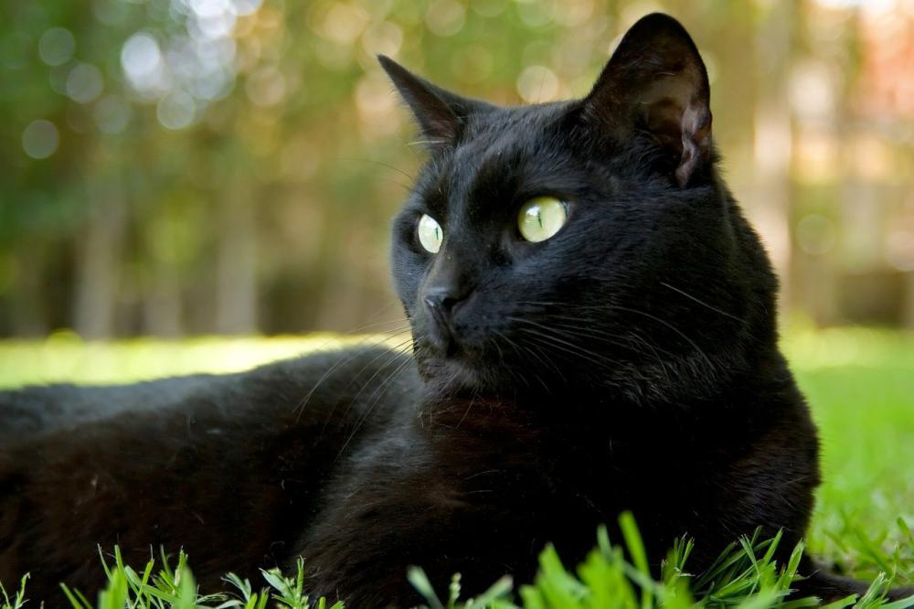 Интересные народные приметы о кошках