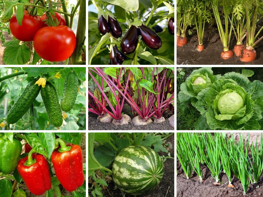 На каком расстоянии друг от друга высаживать овощи