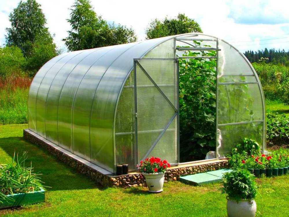 Как вырастить богатый урожай тепличных овощей