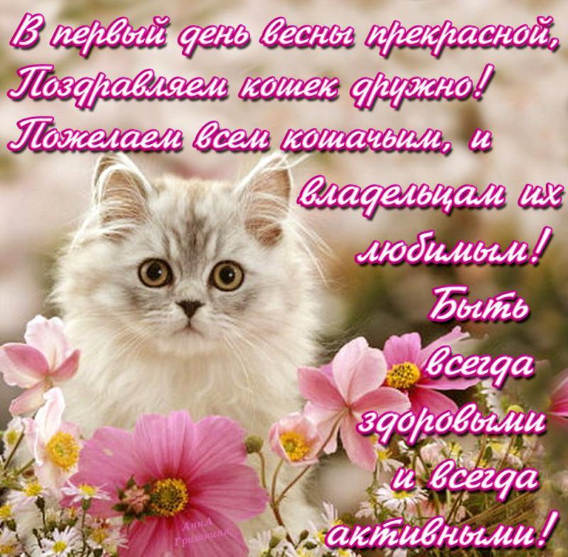 Открытки к дню кошек, рождению внучки открытки