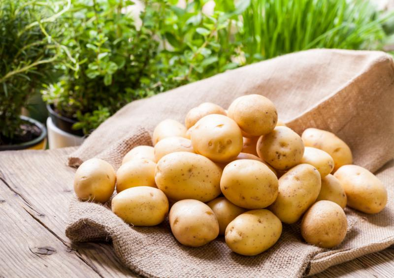 Как бороться с картофельной нематодой